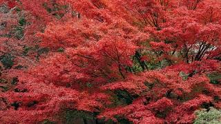 紅葉の季節 京都前撮り TANAN丹庵